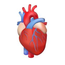 Léky na srdce, cévy a krev