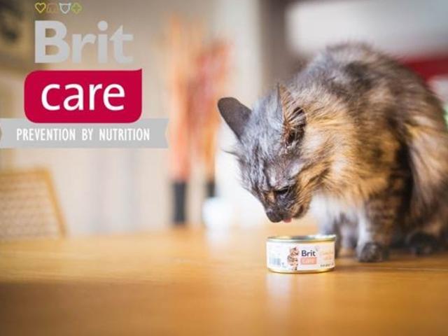 Konzervy Brit Care pro vaše kočičí miláčky